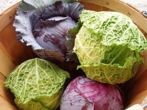 Cabbage-300x225