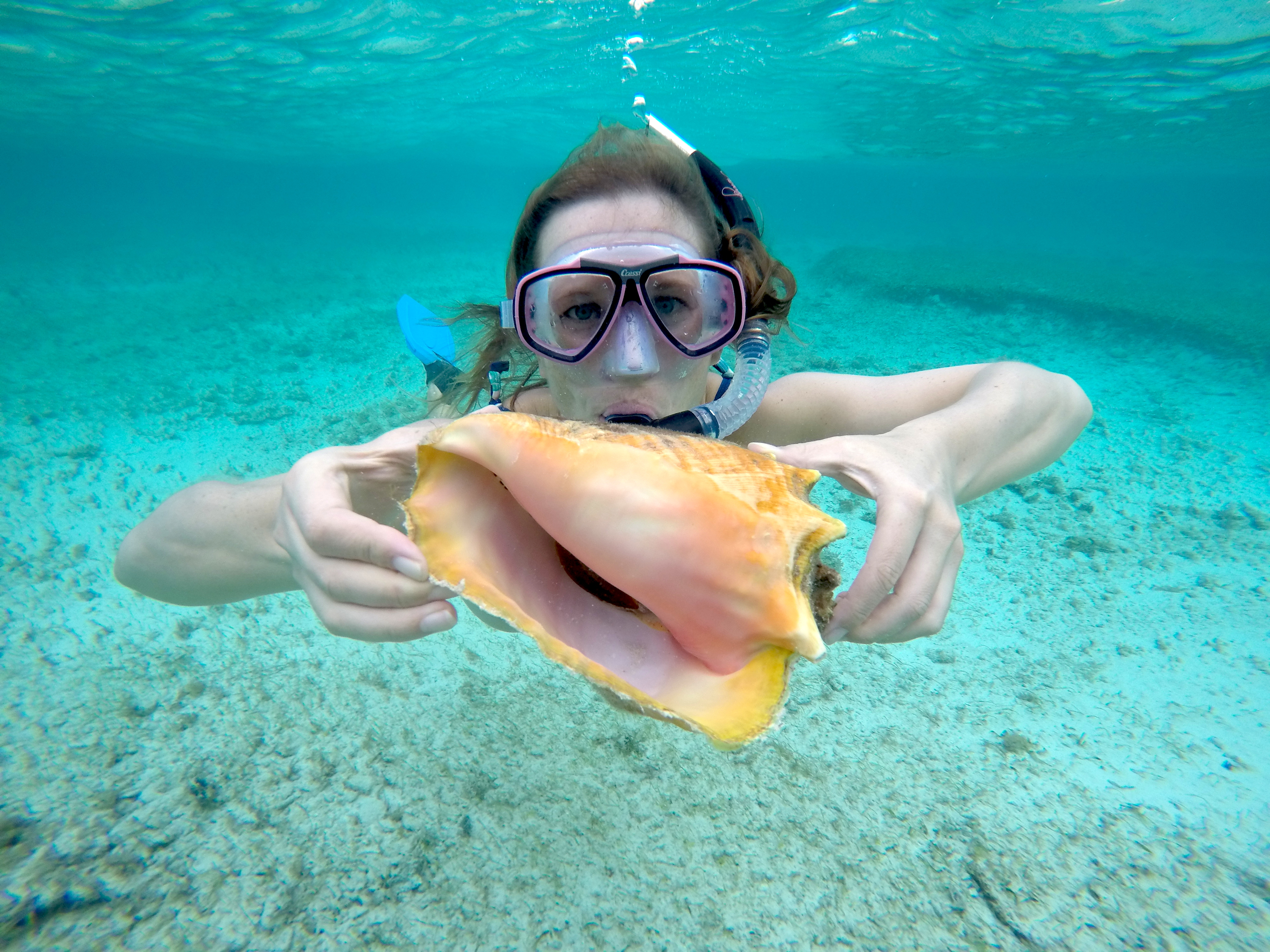 conch-shell