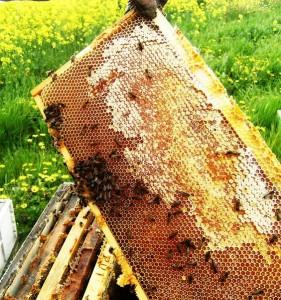 Honey-1-Copy-281x300